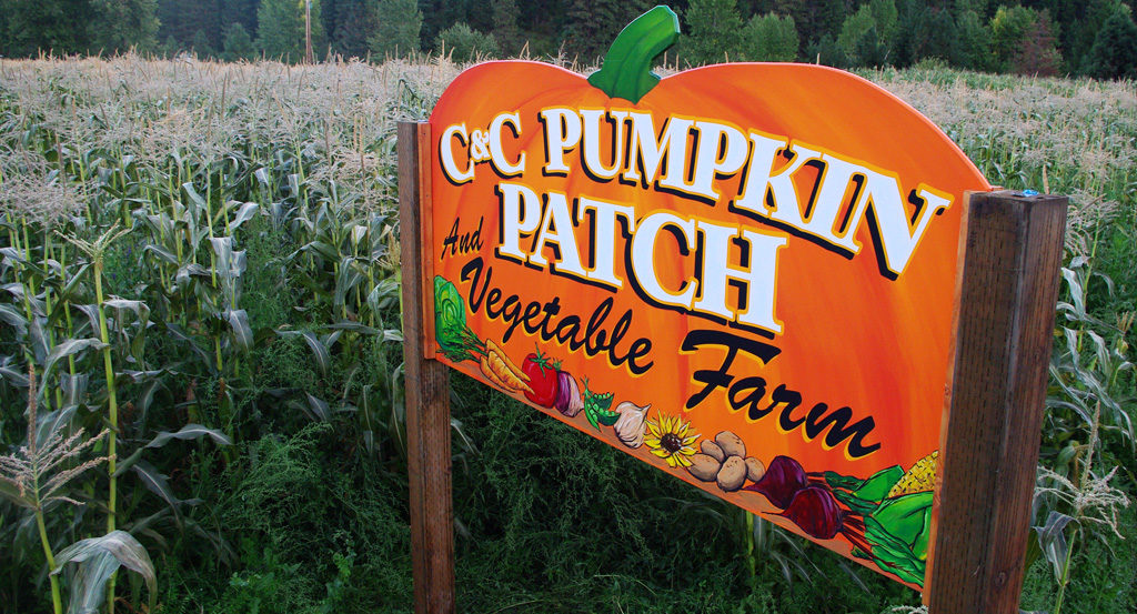 CC Pumpkin